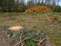 Pile of wood on a clearing Stock Image