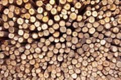 Pile of wood close up Royalty Free Stock Images