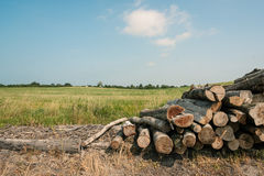 Pile of wood. Countryside landscape with a pile of wood Stock Image