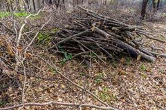 Pile of wood cut and stored in the forest. stock photography