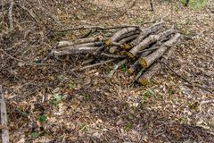 Pile of wood cut and stored in the forest. Pile of wood cut and stored in the forest Royalty Free Stock Image