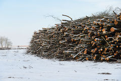Pile of wood in a Danish nature reserve. At Ulvshale, Moen, where the government has cleared the area to enhance species diversity Royalty Free Stock Images