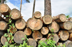 Pile of wood in forest Royalty Free Stock Photos