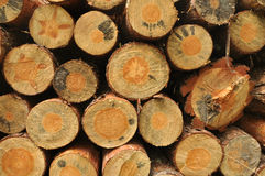 Pile of wood in forest Stock Photography