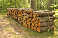 Pile of wood in forest Royalty Free Stock Photo