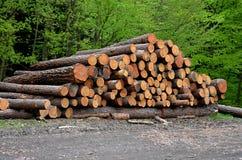 Pile wood Stock Photo