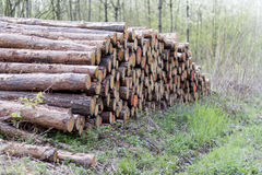 Pile of wood in forest Stock Photos