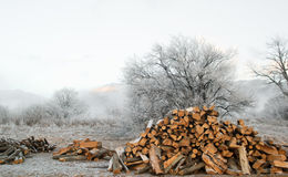 Pile of wood in forest with  winter trees background landscape Royalty Free Stock Photo
