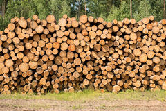 Pile of wood. A pile of wood on the green grass Stock Image