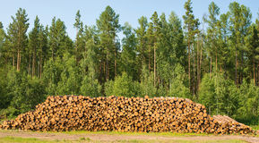 Pile of wood. A pile of wood on the green grass Royalty Free Stock Photos