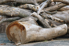 Pile of wood log Stock Photos