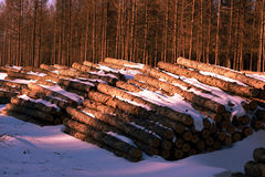 Pile of wood in the logging headquarter Royalty Free Stock Image