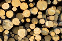 Pile of wood logs Stock Photos