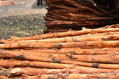 Pile of wood logs Stock Images