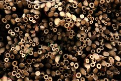 Pile of wood logs. Bamboo Royalty Free Stock Photography