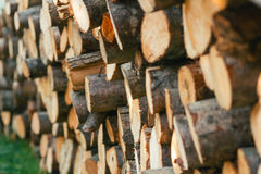 Pile of wood logs Royalty Free Stock Photos