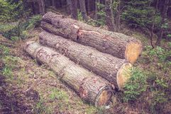 Pile of wood logs on the edge of the forest Royalty Free Stock Photography