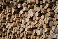 Pile of wood logs .Forest logging site. felled tree trunks. stock images