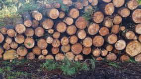 Pile of wood logs and pine branches. On the edge of the forest Royalty Free Stock Photo