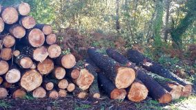 Pile of wood logs and pine branches. On the edge of the forest Stock Images
