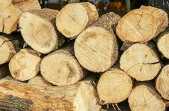 Pile of wood logs ready for winter stock image