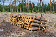 Pile of wood logs Stock Image