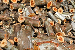 Pile of wood logs ready for winter Stock Photography