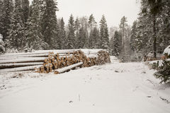 Pile of Wood Logs in Snow Royalty Free Stock Photos
