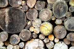 Pile of wood logs, stack of old tree trunks Stock Photo