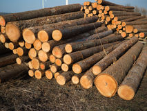 A pile wood logs. Stacked sawed pine logs in a pile Stock Photos