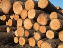 A pile wood logs. Stacked sawed pine logs in a pile Royalty Free Stock Photos