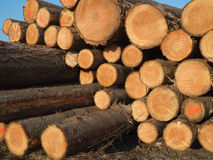 A pile wood logs Stock Photography