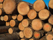A pile wood logs Royalty Free Stock Photos
