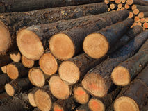 A pile wood logs Stock Photos