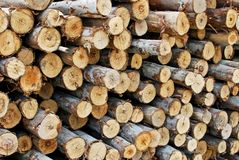 Pile of wood in logs storage Royalty Free Stock Photo