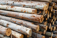 Pile of wood in logs storage closeup. Pile of wood in timeber logs storage for construction or industrial work , texture background stock images