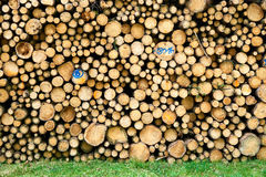 Pile of wood logs stumps in a forest. Royalty Free Stock Images