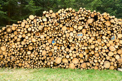 Pile of wood logs stumps in a forest. Royalty Free Stock Photos