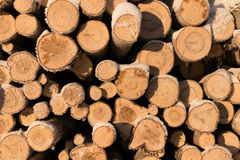 Pile of wood logs. Timber texture. Royalty Free Stock Photo