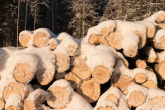 Pile of wood logs. Timber texture. Stock Image