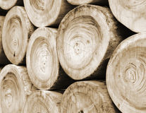 Pile of wood logs or wood background Stock Photos