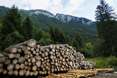 Pile of wood. Near a forest Royalty Free Stock Images