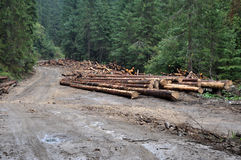 Pile of wood near forest road Royalty Free Stock Photo