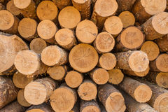Pile of wood. Pine logs stacked in a pile Stock Image