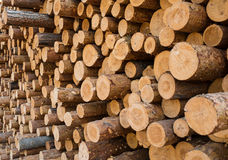 Pile of wood. Pine logs stacked in a pile Royalty Free Stock Photo