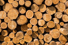 Pile of wood. Pine logs stacked in a pile Stock Images