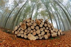 A pile of wood prepared for export from the forest. Fog in decid stock photo