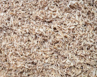Pile of wood sawdust for background, texture Stock Photography