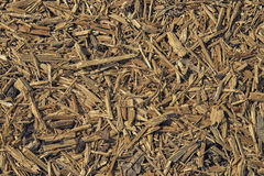Pile of wood sawdust for background or texture Stock Images