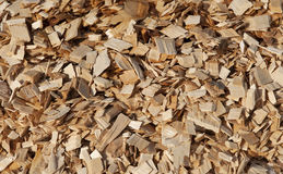 Pile of wood shavings Stock Image